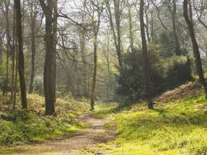 Spring paths through Brazier's Common
