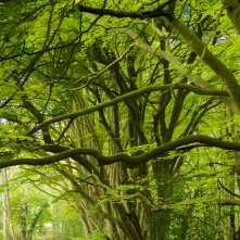 Hoo Bit Woods