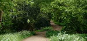 Quiet tracks near Datchworth, Hertfordshire