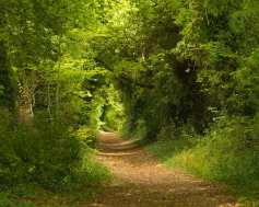 Path to The Ridgeway