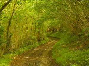 Summer walks in Oxfodshire lanes