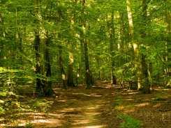 Moor Wood