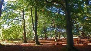 The Old Cricketground Plantation