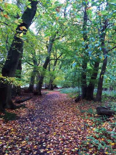 An autumn walk in Nettlebed Woods, Bucks