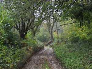 Autumn lanes, Bucks