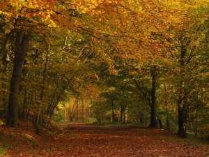 Full on Autumn