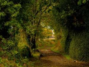Lanes near Great Missenden