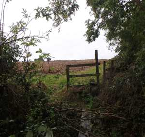 Overgrown footpaths