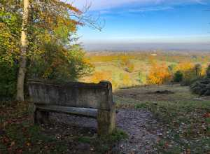 Tring from the woods