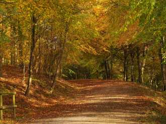 Wendover Woods in Autumn