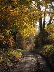 Ashridge Estate in the Autumn
