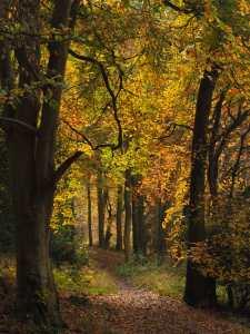 Ashridge paths