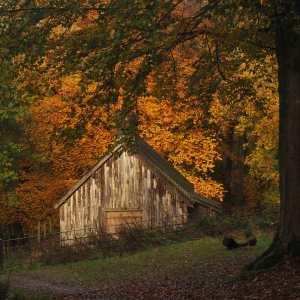 Autumn colours on Ashridge